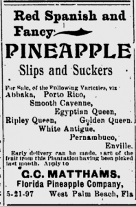 Pineapple newspaper ad
